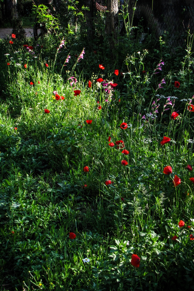 Wildflowers in Tuscany