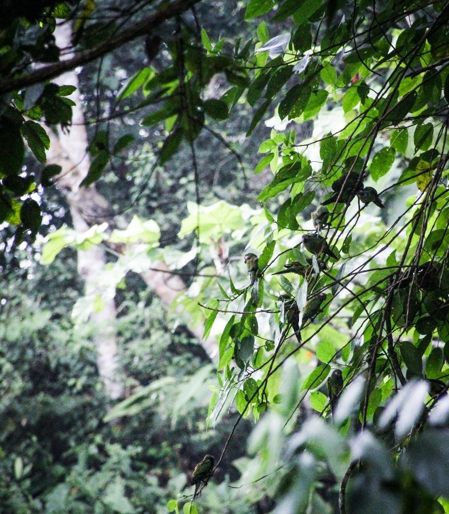 Ecuador Travelogue: The Amazon - Parakeets at the Clay Lick {Katie at the Kitchen Door}